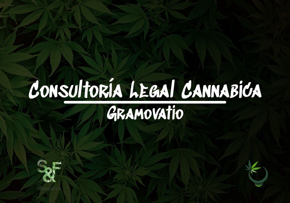 consultoria legal cannabica