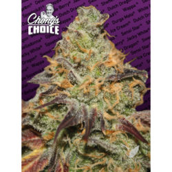 BLUE KUSH BERRY (3) 100% PARADISE CHONGS CHOICE
