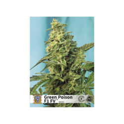 GREEN POISON F1 FAST VERSION (3) 100% SWEET SEEDS