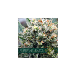 Supreme lemon (3) 100% vision seeds
