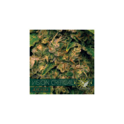 Vision critical (3) auto vision seeds